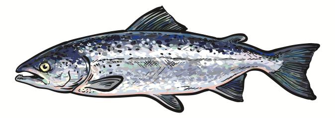 Salmon Port Orford BBQ